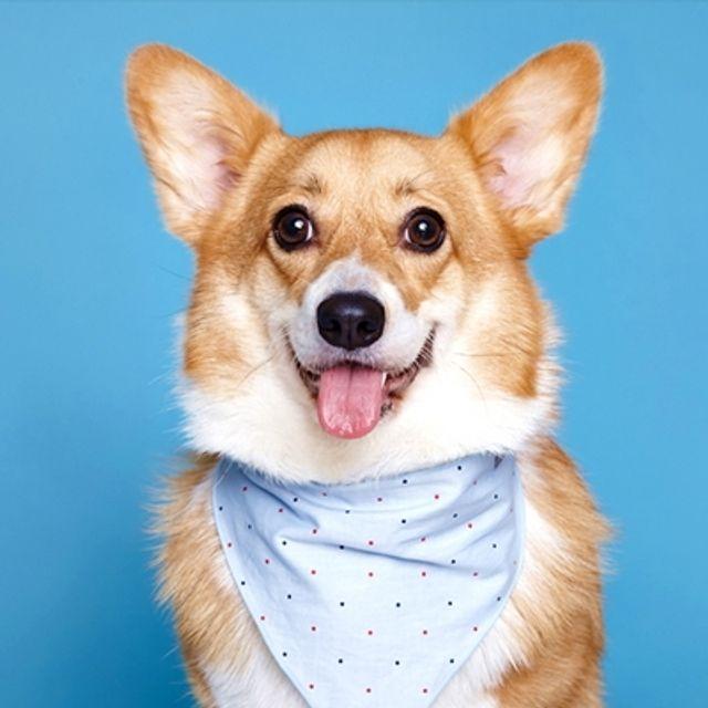 Cotton scarf (sky blue) for pet L