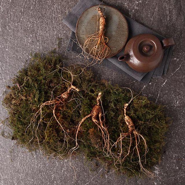 W24161D산양삼 10년근 7뿌리 평창 산양삼 화락진생