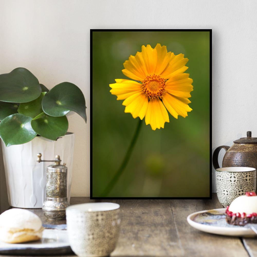 사진 인테리어 액자  꽃 식물 사진 작품 A3블랙AL3