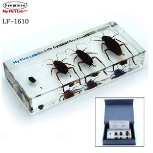 프리미어 LF-1610 성장표본 바퀴벌레