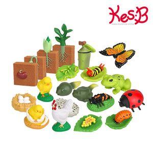 (캐스B)네이처 성장모형5종세트(2051)