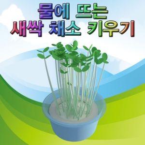 물에 뜨는 새싹 키우기 (10인용)