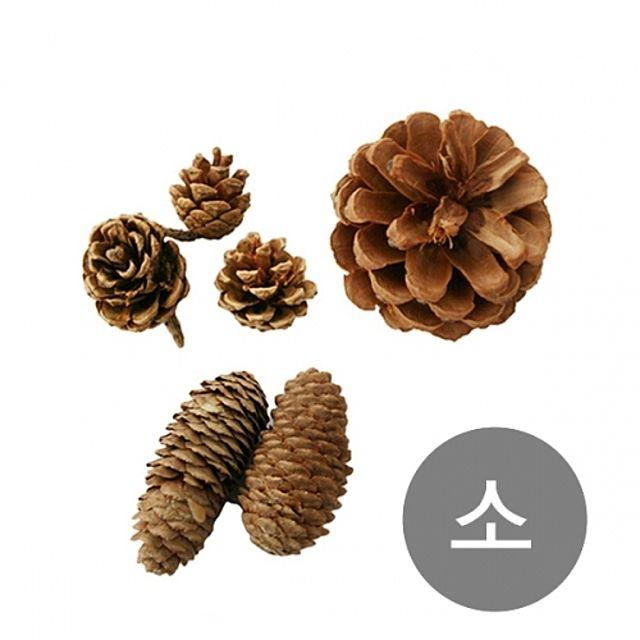 천연 솔방울 소나무 만들기 크리스마스 나무 공예 트리 자연 장식 미니 나무 원목 소품 교구 학습 소 [제작 대량 도매 로고 인쇄 레이저 마킹 각인 나염 실크 uv 포장 공장 문의는 네이뽕]