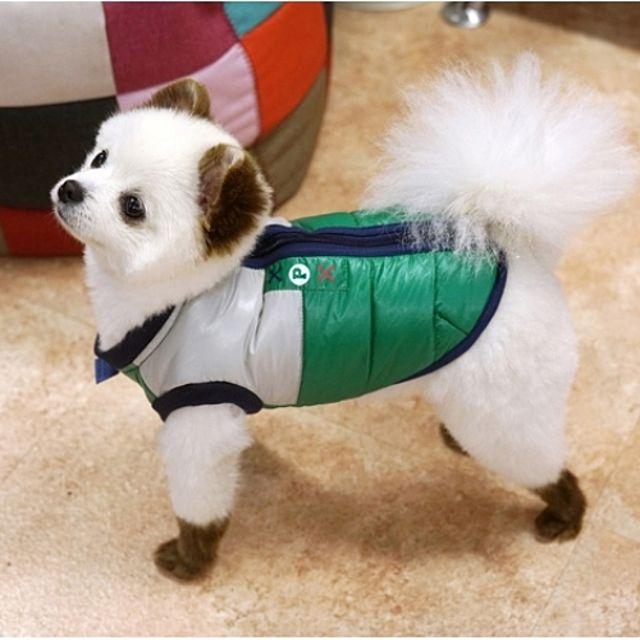 패리스독 강아지 패딩 그린 싸인램프 애견 겨울옷