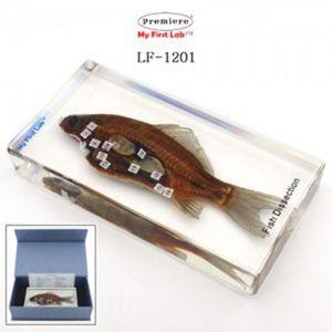 LF-1201 표본물고기해부