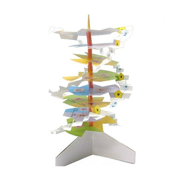 [현재분류명],DNA 입체 구조 만들기 10명,