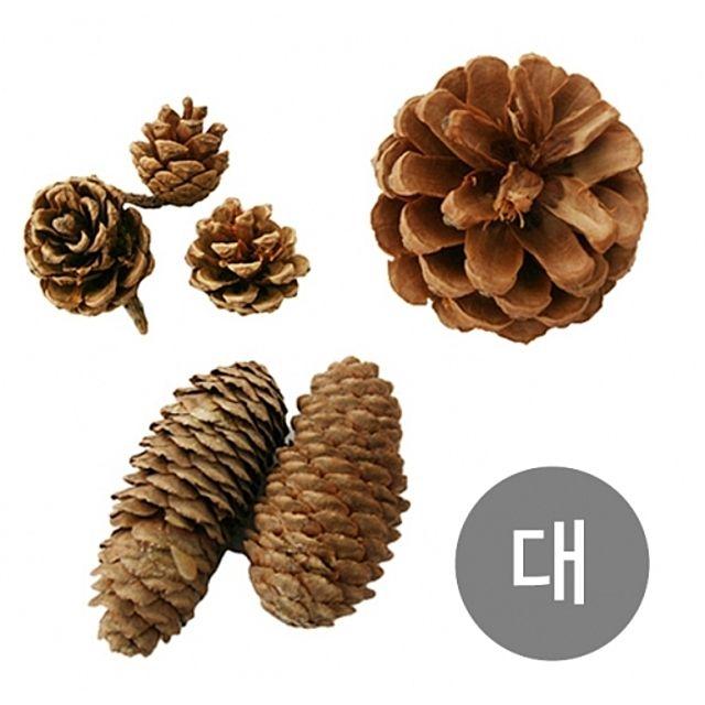 천연 솔방울 소나무 만들기 크리스마스 나무 공예 트리 자연 장식 미니 나무 원목 소품 교구 학습 대 [제작 대량 도매 로고 인쇄 레이저 마킹 각인 나염 실크 uv 포장 공장 문의는 네이뽕]