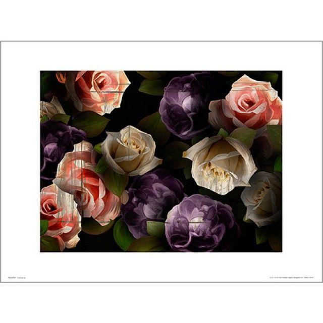 PDH01390 Rose dark (40x50) (포스터만)