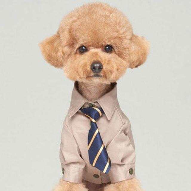 애완견 반려 동물 외출 턱시도 깔끔 젠틀 셔츠 베이지