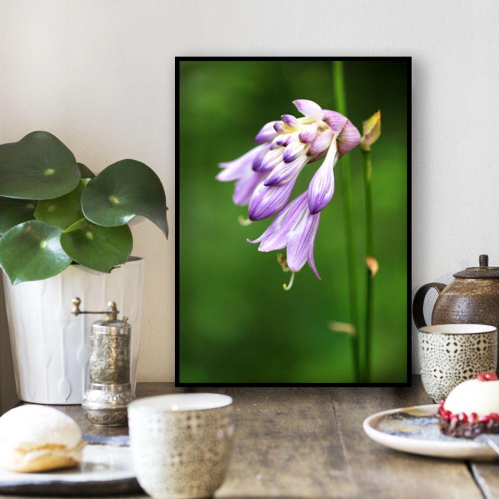 사진 인테리어 액자  꽃 식물 사진 작품 A3블랙AL7