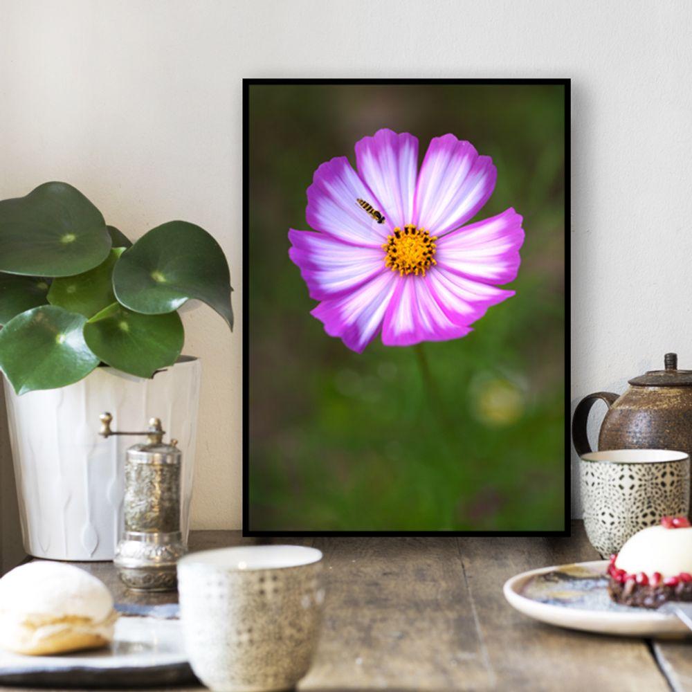 사진 인테리어 액자  꽃 식물 사진 작품 A3블랙AL6