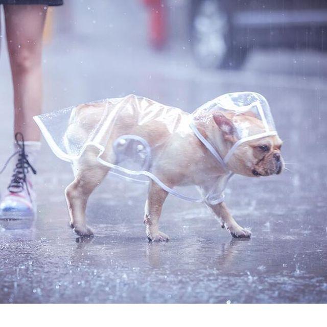 [해외] 애견 투명 레인코트 강아지 비옷 반려동물 패션의상