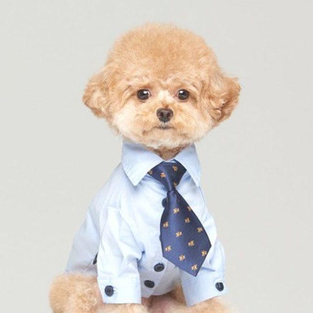 강아지 외출복 애견 셔츠 특별한 턱시도 가을옷 블루