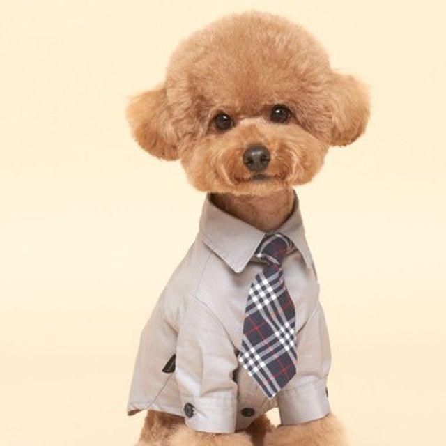 반려 동물 강아지옷 패션 산책 봄 가을 셔츠 그레이