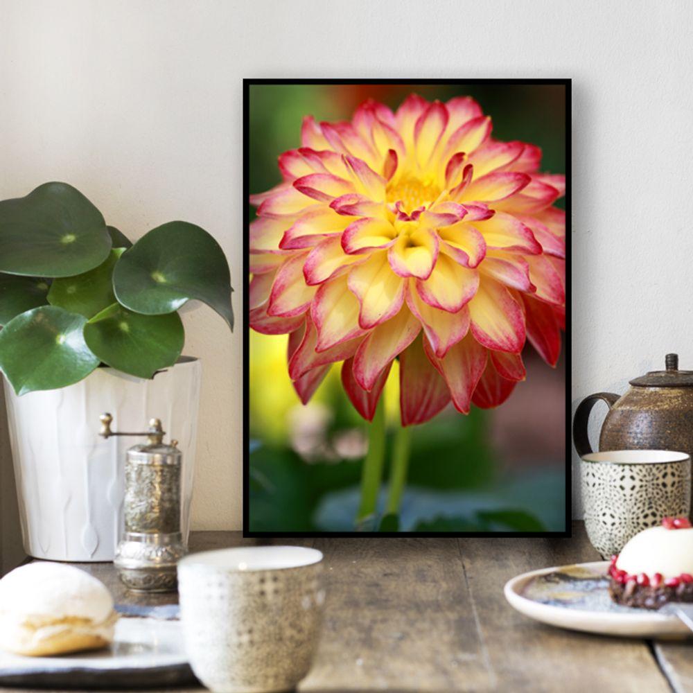 사진 인테리어 액자  꽃 식물 사진 작품 A3블랙AL9
