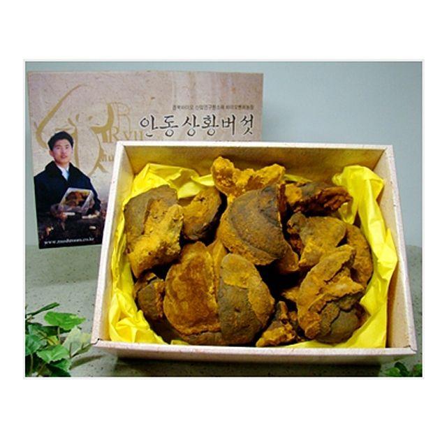 류충현 상황버섯(중품) 1kg