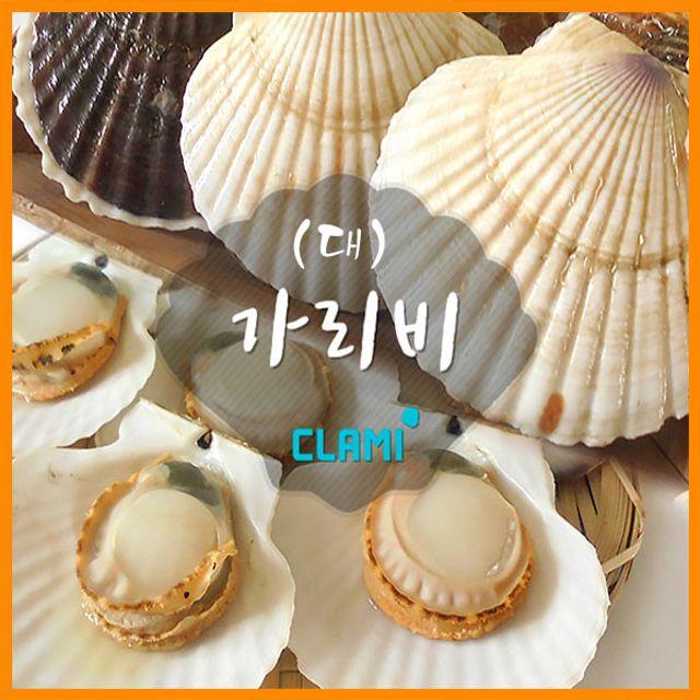 싱싱한 수산 가리비(대)