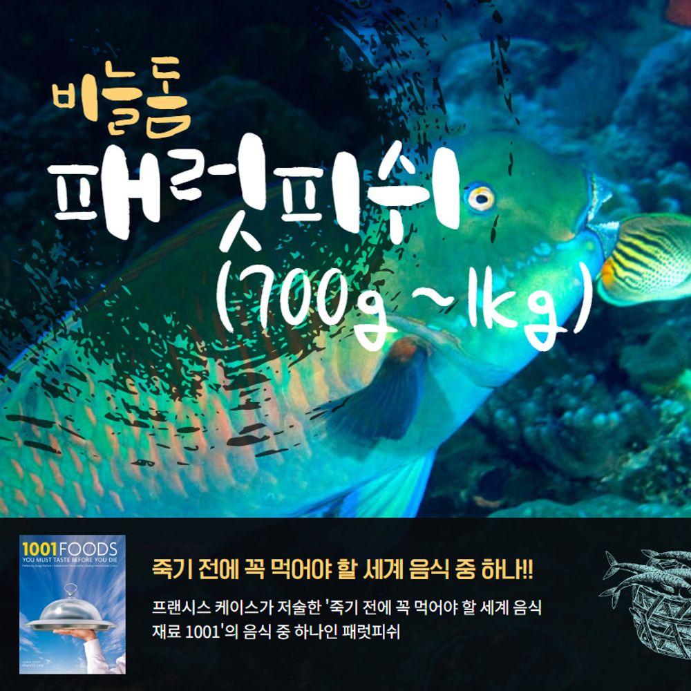 자연산 비늘돔 패럿피쉬 1마리(700-1kg) 손질냉동생선