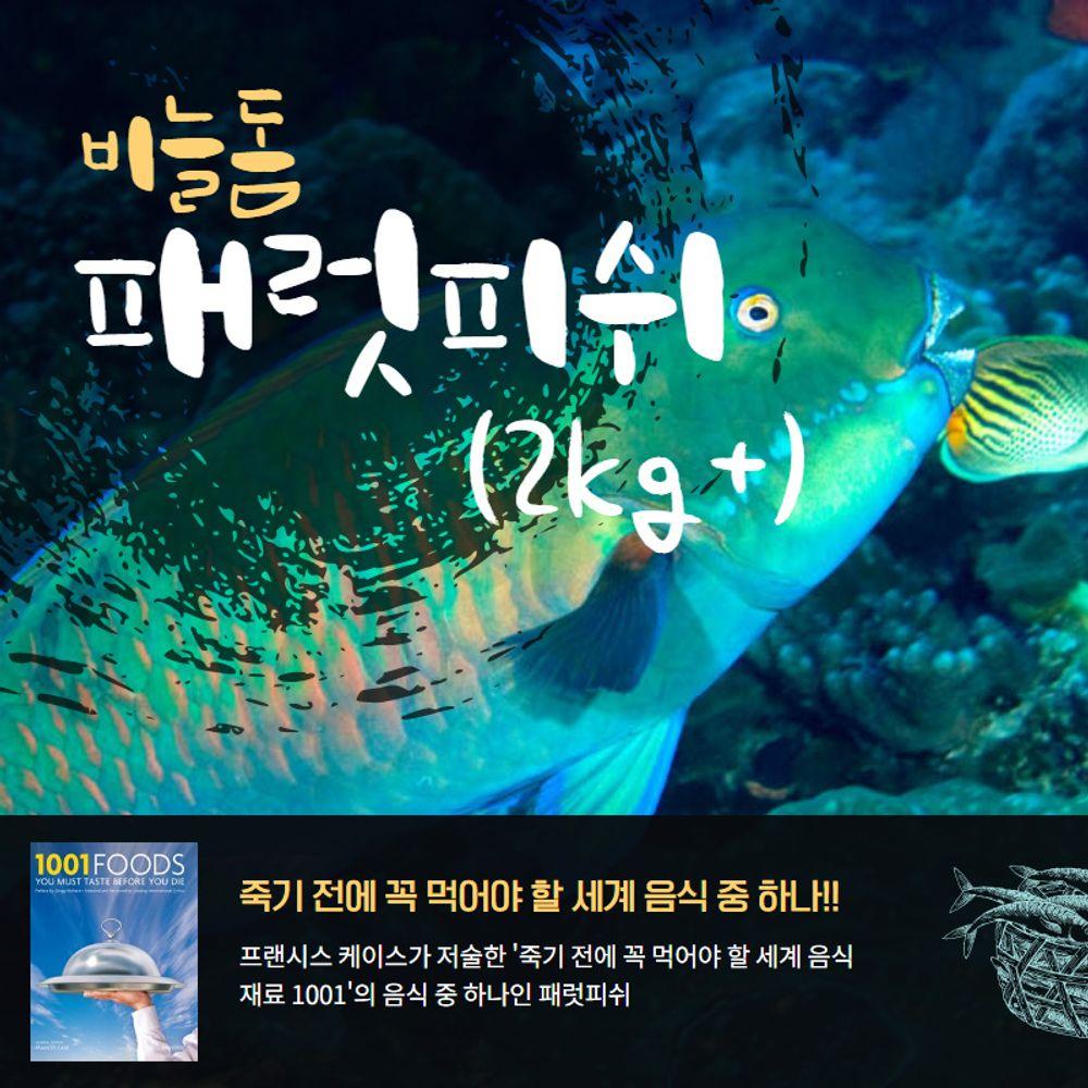 자연산 비늘돔 패럿피쉬 1마리(2kg이상) 손질냉동생선