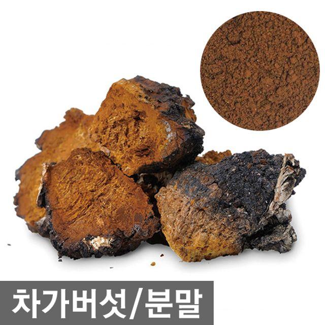 (러시아) 차가버섯 1kg(500g+500g) 분말가루 차
