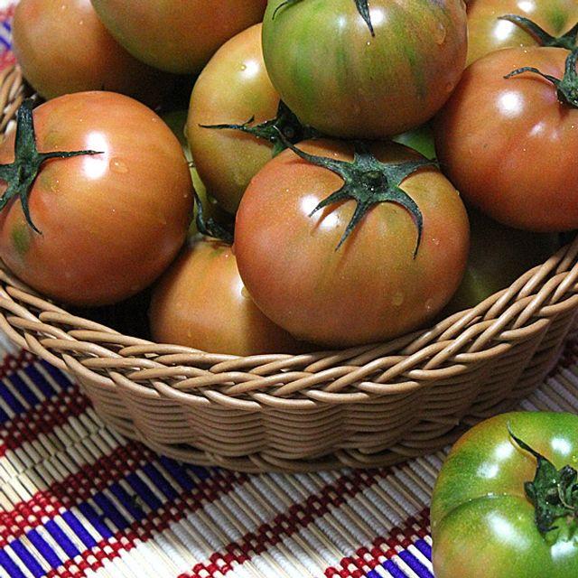 대저농협인증 부산 대저 짭짤이 토마토