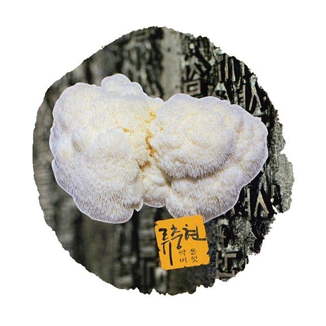 류충현 원목재배 노루궁뎅이버섯 300g