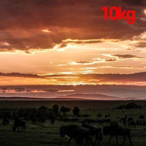 아이티알,MZ 에티오피아원두 예가체프 싱글오리진 대용량커피 10kg