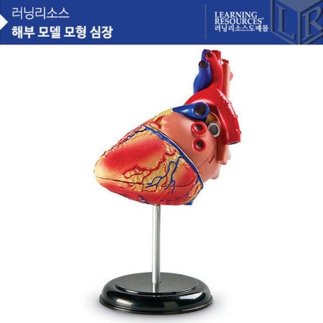 (러닝리소스)LER3334 해부 모델 모형 심장