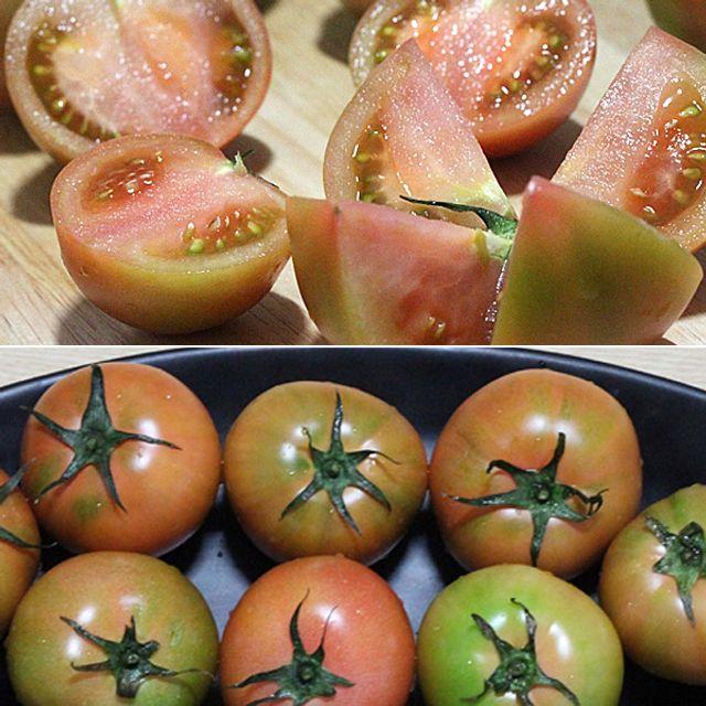 대저농협인증 부산 대저 짭짤이 쥬스용 토마토(랜덤)