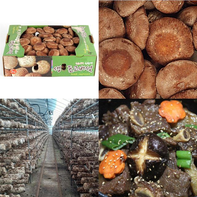 함양 산지직송 무공해 생 표고버섯 중품 2kg
