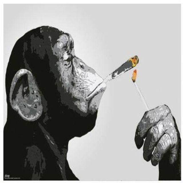 스티즈 원숭이 스모킹