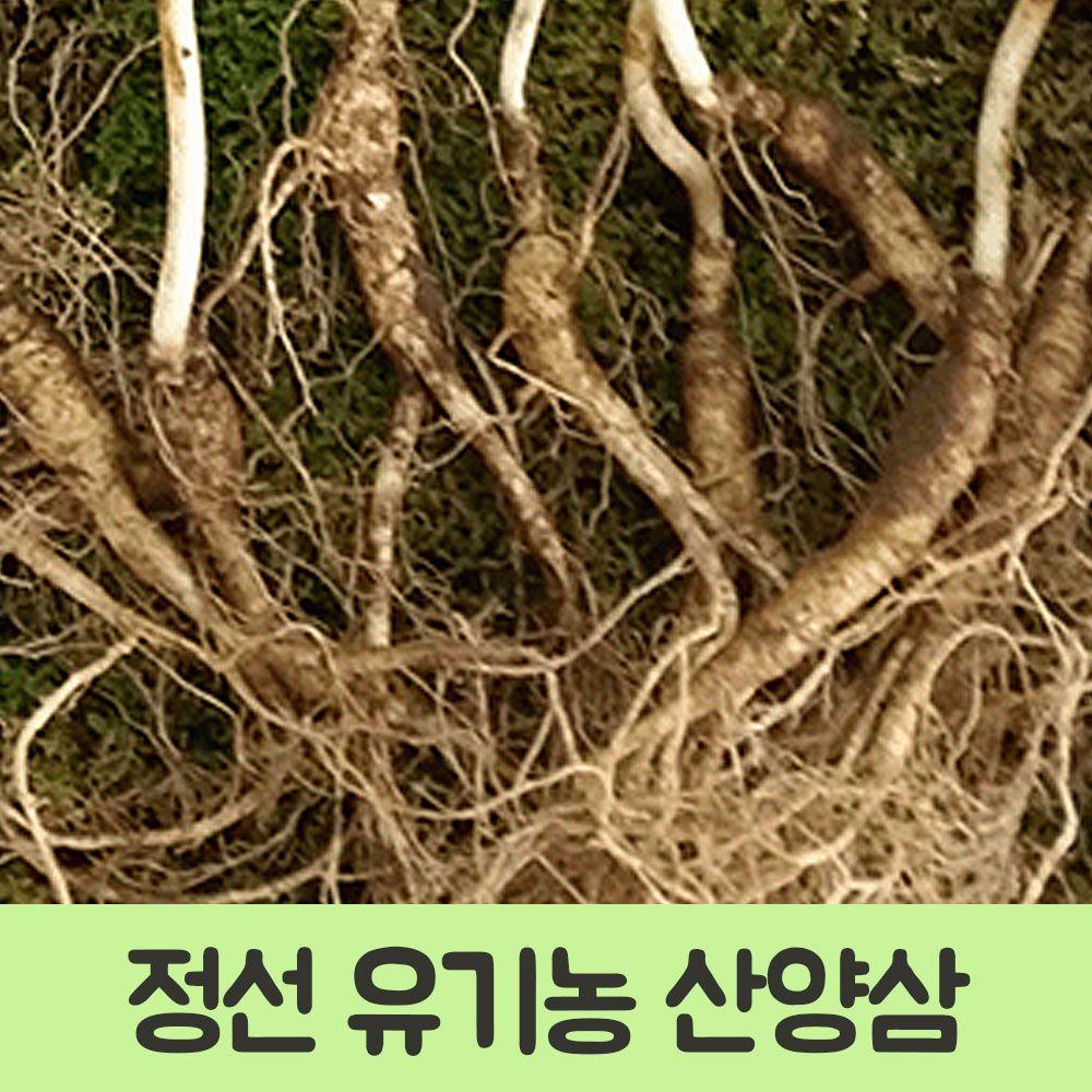 정선 자연에서 자란 야생 산양삼 10-12년근