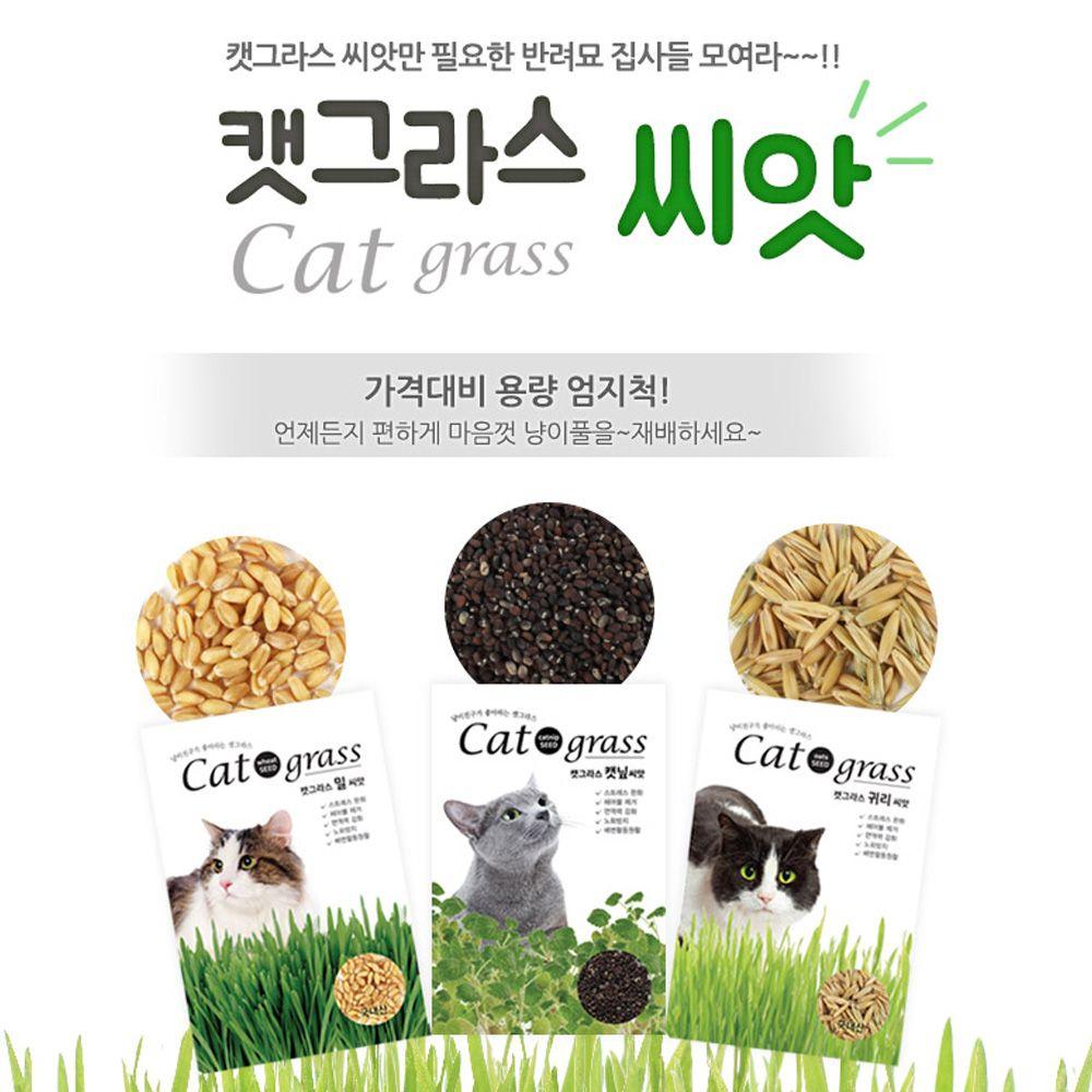키우기쉬운 고양이풀 캣닢 씨앗